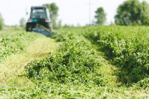 clover-field